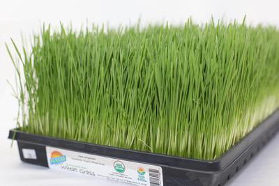 Wheatgrass | Product Marketplace