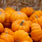Pumpkin-Flavored Food Sales Soar